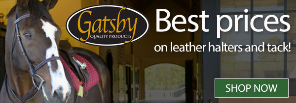 Best prices on leather halters and tack! Shop Now »