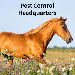 Pest Control Headquarters - Your guide to a fly-free season!