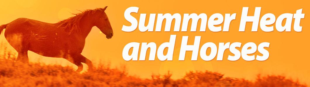 Summer Heat and Horses
