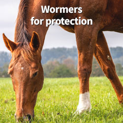 There's more than grass in your pasture. Wormers for protection!