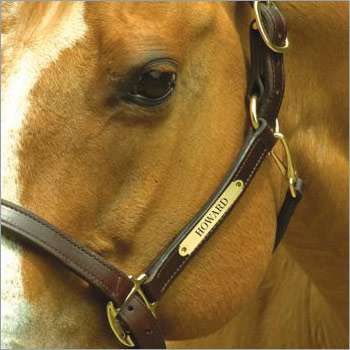 Personalized Halters