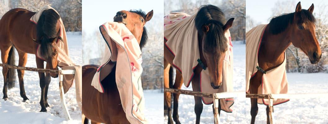 Understanding Horse Blankets