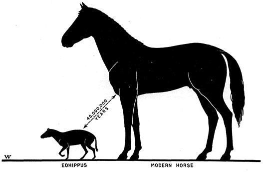 prehistoric vs modern day horses