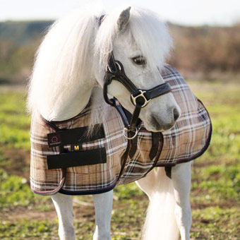 Pony-Sized Fly Sheets
