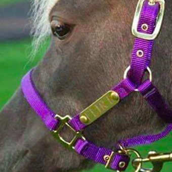 Personalized Leather Halters