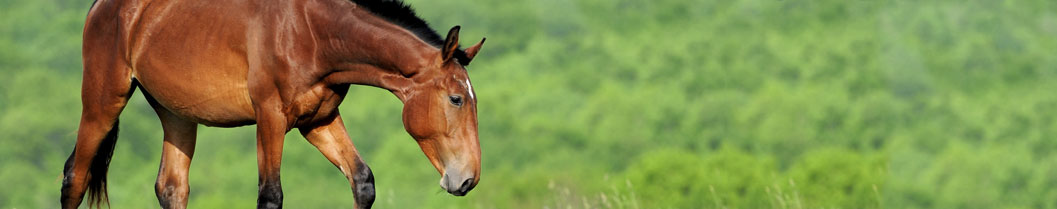 Vaccination for Adult Horses