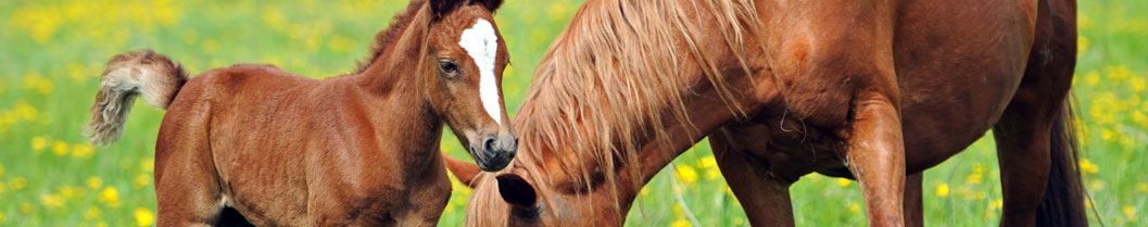Vaccination for Foals