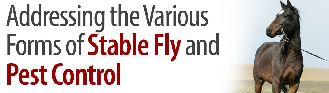 Addressing the Various Forms of Stable Fly and Pest Control