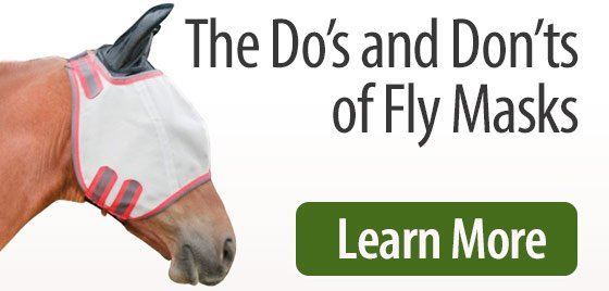 The Dos and Donts of Fly Masks