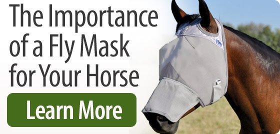 The Importance of Fly Masks