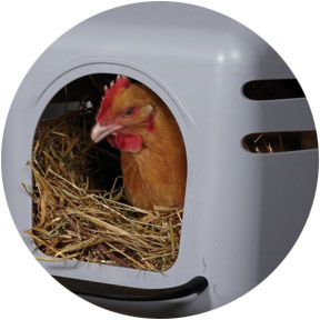 Poultry Supplies