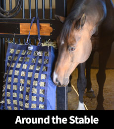 Around the Stable