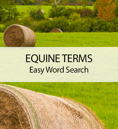 Equine Terms - Easy Word Search