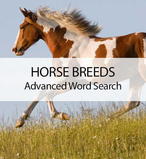 Horse Breeds - Advanced Horse Search