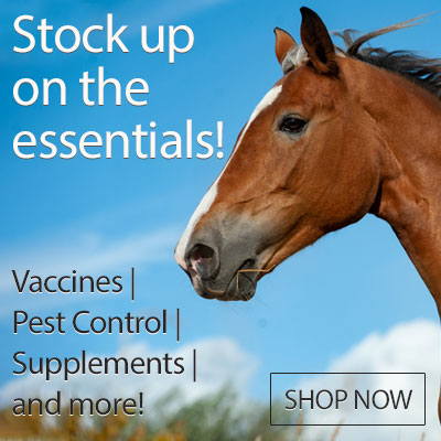 Stock up on the essentials - Shop Now