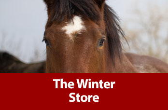 The Winter Store