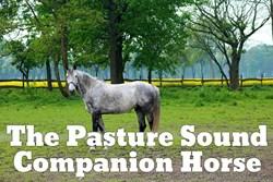 Thumbnail The Pasture Sound Companion Horse