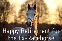 Thumbnail Happy Retirement for the Ex-Racehorse