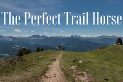 Thumbnail Building the Perfect Trail Horse