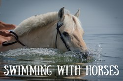 Thumbnail Swimming With Horses